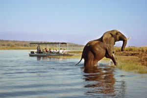 best things to do on South Africa River cruises