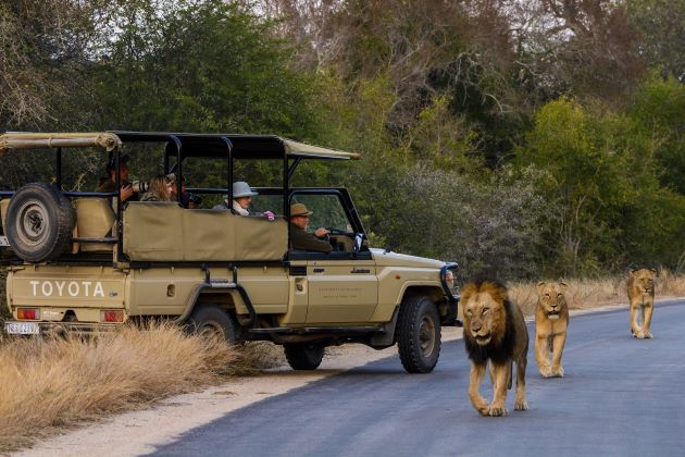 game drive during south africa river cruises