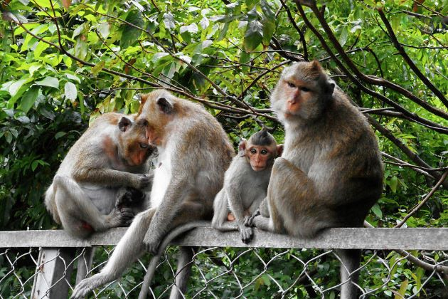 monkeys in cambodia on mekong river cruise vacations